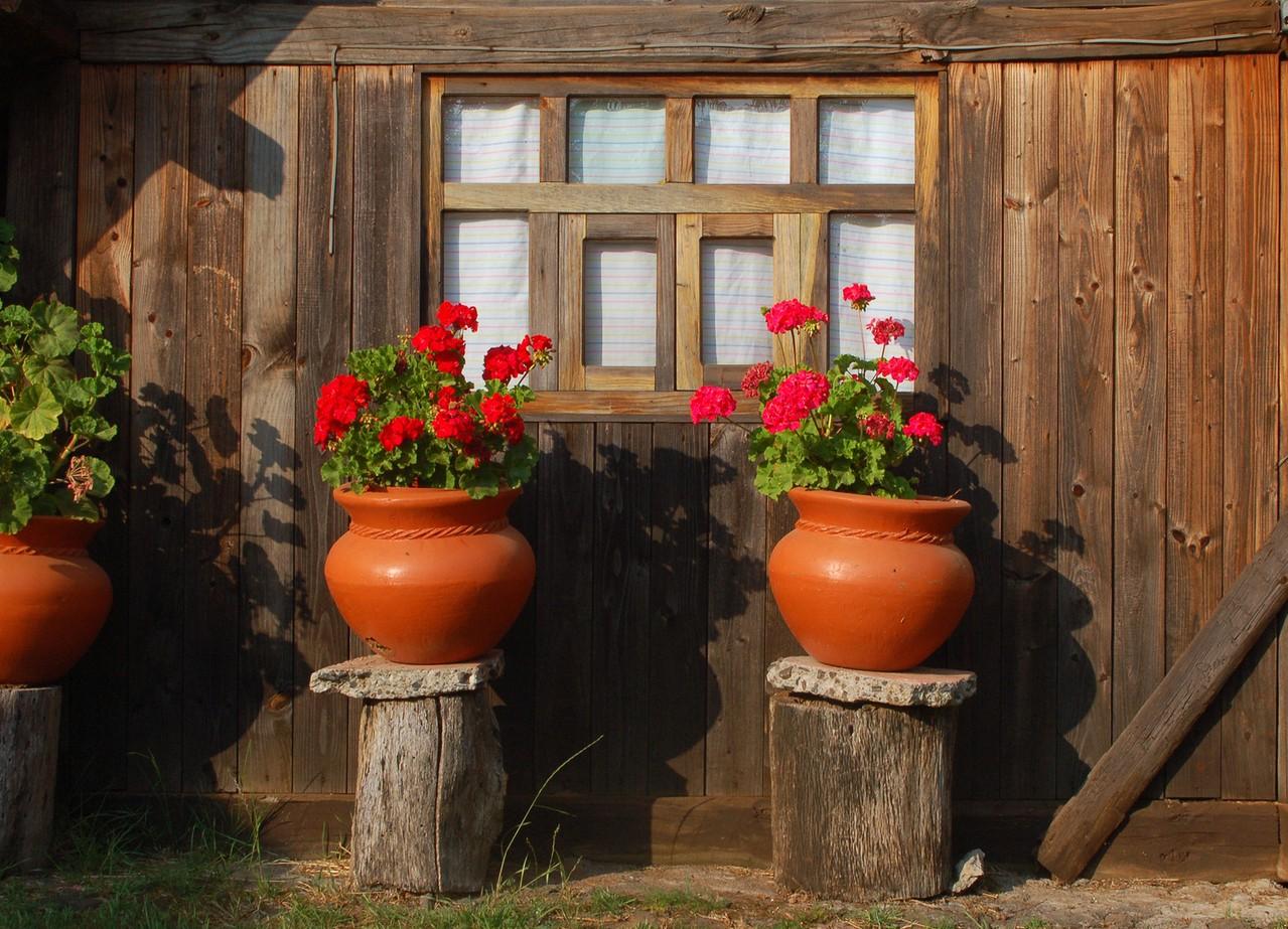 Jak zadbać o rośliny w ogrodzie zimowym?